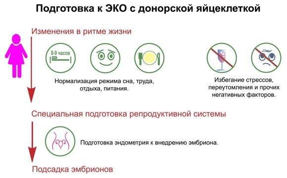Подготовка к ЭКО с донорской яйцеклеткой