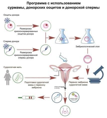 ЭКО с суррогатной мамой, донорскими ооцитами и донорской спермой