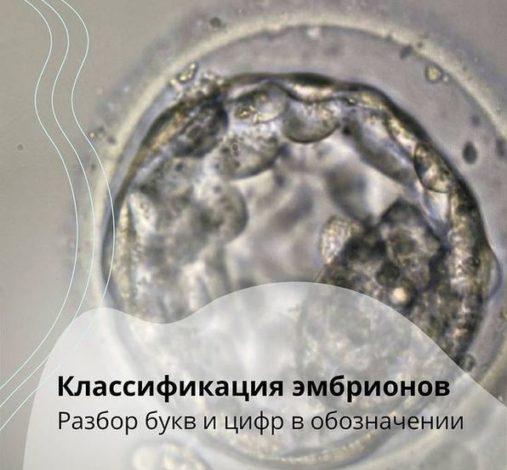 О Классификации Эмбрионов. Буквы И Цифры В Обозначении.